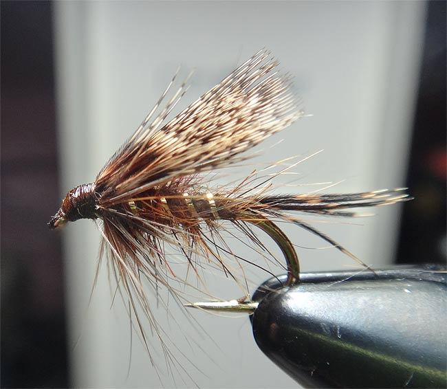 dark red fox squirrel and partridge wet flies