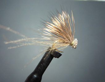 CDC Caddis pattern