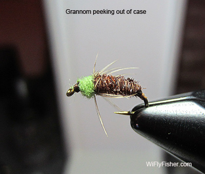 Grannom larva in case pattern